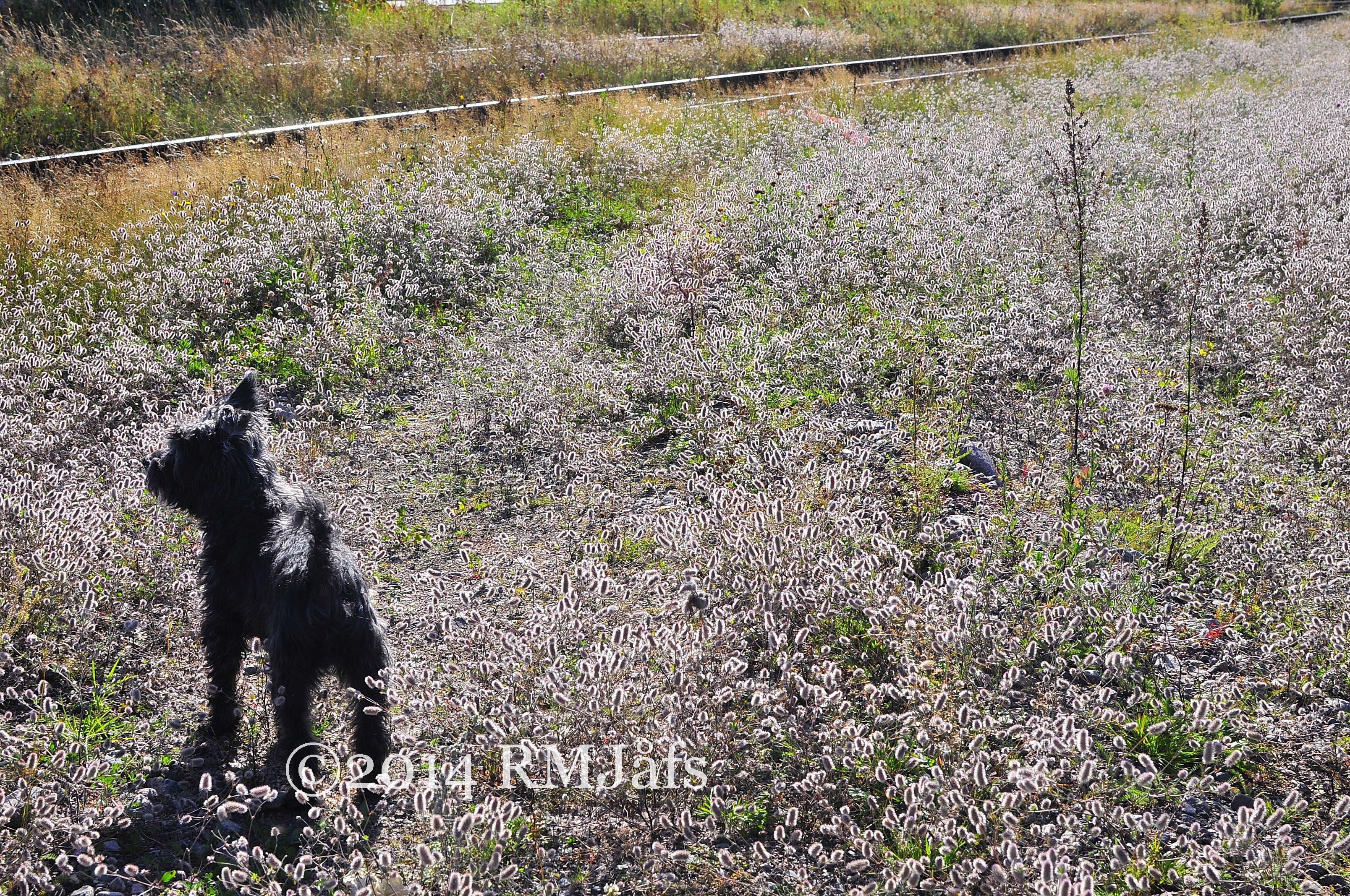 Hundpromenad Vetlanda 2012-3