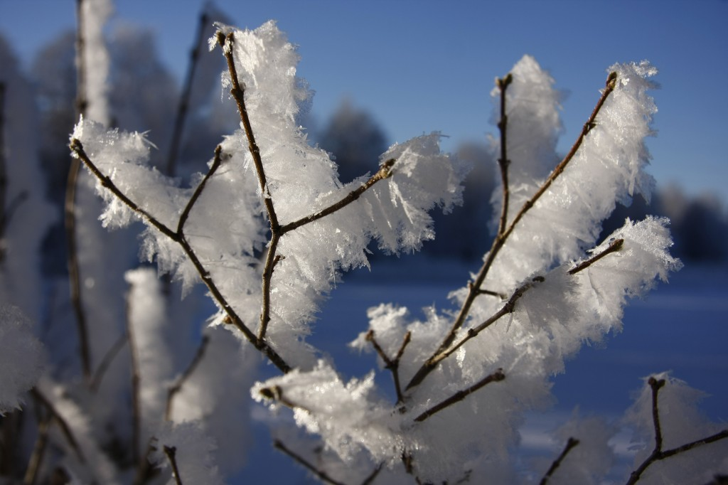 Vinter Ekenässjön Januari 2013 065-1